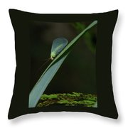 A Little Bug On A Grass Blade  Throw Pillow