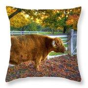 A Little Shaker Bull 2 Throw Pillow