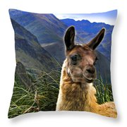 A Llama In The Cajas In Ecuador Throw Pillow
