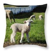A Longwool Lamb Throw Pillow