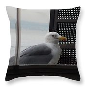 A Looking Seagull Throw Pillow