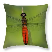 A Male Forest Chaser Dragonfly Rests Throw Pillow