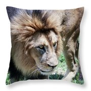 A Male Lion, Panthera Leo, King Of Beasts Throw Pillow