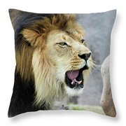 A Male Lion, Panthera Leo, Roaring Loudly Throw Pillow