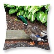 A Male Mallard Duck 4 Throw Pillow
