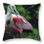 A Male Roseate Spoonbill Is In Breeding Throw Pillow