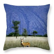 A Male Ugandan Kob Stands His Ground Throw Pillow