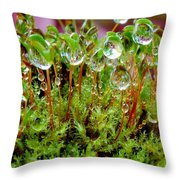 A Microcosm Of The Forest Of Moss In Rain Droplets Throw Pillow