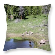 A Moose In The Rockies Throw Pillow