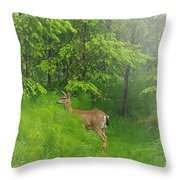 A Morning Stroll  Throw Pillow