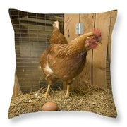 A New Hampshire Red Hen Chicken Throw Pillow