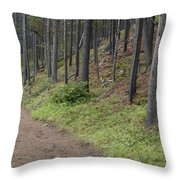 A Path In The Woods Throw Pillow