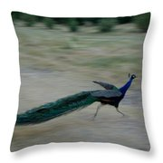 A Peacock On A Hog Farm In Kansas Throw Pillow