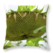A Perfect Pattern  Throw Pillow