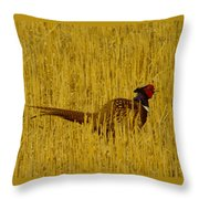 A Pheasant Looking For A Mate Throw Pillow