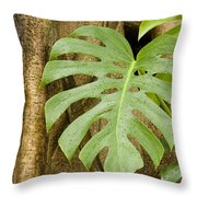 A Philodendron Grows On The Side Throw Pillow