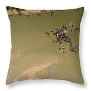 A Pod Of Hippos In The Luangwa River Throw Pillow