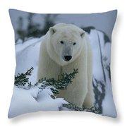 A Polar Bear In A Snowy, Twilit Throw Pillow by Norbert Rosing