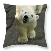 A Polar Bear Looks Up At Its Observers Throw Pillow