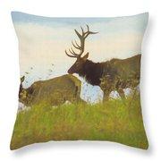 A Portrait Of A Large Bull Elk Following A Cow,rutting Season. Throw Pillow