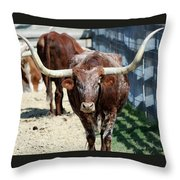 A Portrait Of A Texas Longhorn Steer Throw Pillow