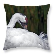 A Preening Whooping Crane Throw Pillow