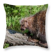 A Prickly Situation Throw Pillow