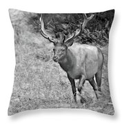 A Rack Of Antlers - Roosevelt Elk - Olympic National Park Wa Throw Pillow