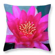 A Red And Yellow Water Lily Flower Throw Pillow