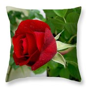 A Red Rose In The Dew Of Pearls Hours Throw Pillow