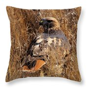 A Red Tailed Hawk  Throw Pillow