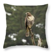 A Red-tailed Hawk Juvenile Throw Pillow