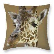 A Reticulated Giraffe Makes A Slanted Throw Pillow