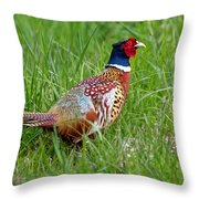 A Ring-necked Pheasant Walking In Tall Grass Throw Pillow