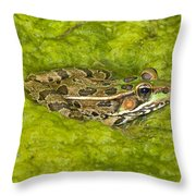 A Rio Grande Leopard Frog Sitting On A Throw Pillow