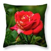 A Rose In Los Gatos Throw Pillow