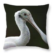A Roseate Spoonbill Ajaia Ajaja Throw Pillow