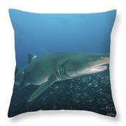 A Sand Tiger Shark Above A School Throw Pillow