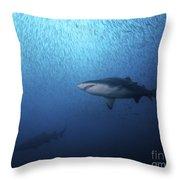 A Sand Tiger Shark And School Of Cigar Throw Pillow