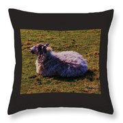 A Sheep In Wales Throw Pillow