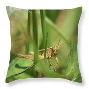 A Shy Grasshopper Throw Pillow