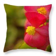 A Soft Red Flower Throw Pillow