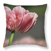 A Soft Tulip In Focus Throw Pillow