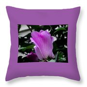 A Soft Violet Rose Of Sharon Throw Pillow