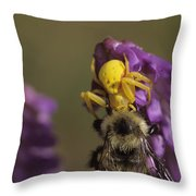 A Spider Eats A Bumblebee While Perched Throw Pillow
