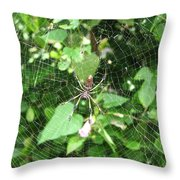 A Spider Web Throw Pillow