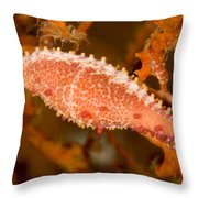 A Spindle Cowrie Snailphenacovolva Sp Throw Pillow
