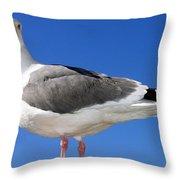 A Splendid Seagull Throw Pillow