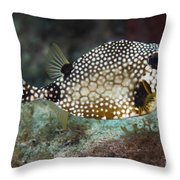 A Spotted Trunkfish, Key Largo, Florida Throw Pillow