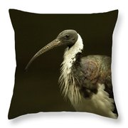A Straw-necked Ibis Threskiornis Throw Pillow